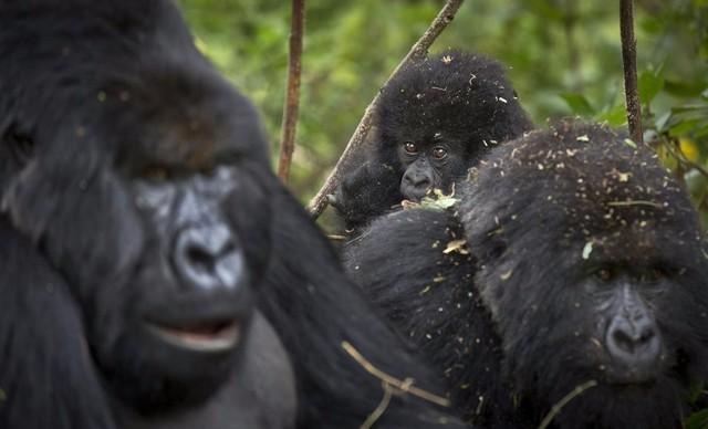 2015年野生动物摄影作品欣赏