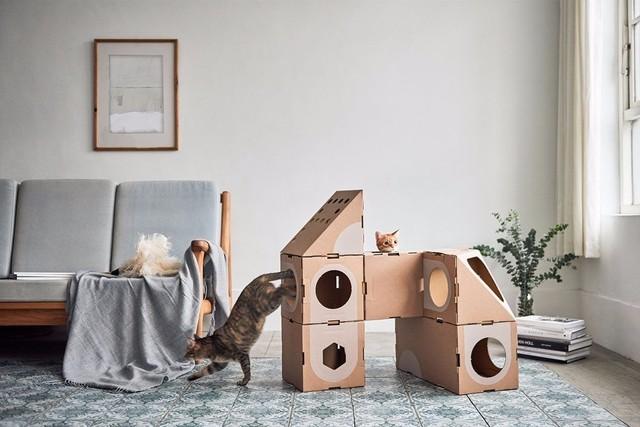 考虑到充满好奇心的喵星人对纸盒子缺乏天然的抵抗力